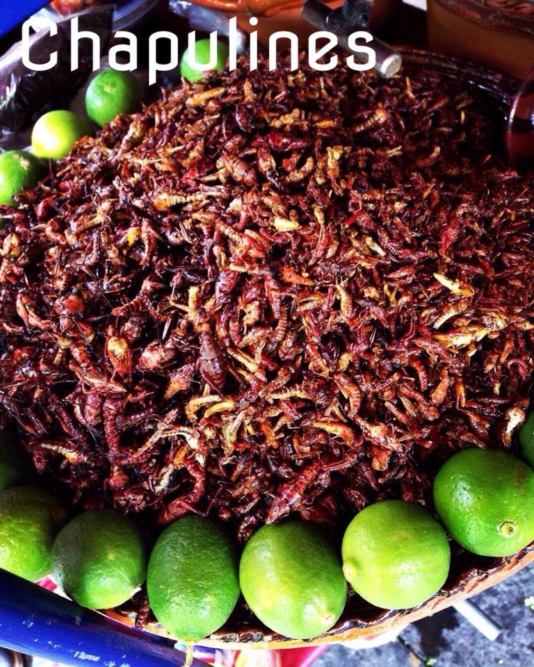 kuchnia meksykańska - koniki polne