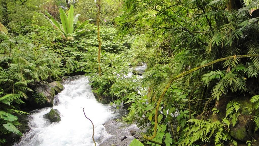 Park lasy deszczowe Meksyku